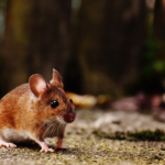 How Exterminators Deal With Removal of Rats, Bats and Snakes at Home